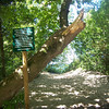 <b>Submitted By:</b> Sherry L. Good <b>From:</b> Interlochen <b>Description:</b> A path to Empire Beach.