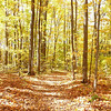 <b>Submitted By:</b> Arlene Beall <b>From:</b> Williamsburg <b>Description:</b> Fall Color Tour