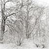 <b>Submitted By:</b> Peggy Sue Zinn <b>From:</b> Traverse City <b>Description:</b> Winter Wonder Land