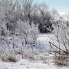 Ice trees - Winter has it's own magic.<br /> <br /> Bill Scott<br /> bshm@charter.net