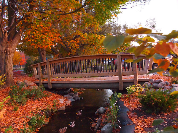 <b>Submitted By:</b> Gwen Rusnell <b>From:</b> Mancelona <b>Description:</b> This picture was taken at Muson Hospital this Fall! The way the color looked with the bridge was amazing! It also included 3 mallard's swimming.