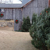 <b>Submitted By:</b> Sherry Kula Tucker <b>From:</b> Traverse City <b>Description:</b> So much for a white Christmas!