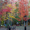 <b>Submitted By:</b> Sherry L. Good <b>From:</b> Interlochen <b>Description:</b> Our back yard