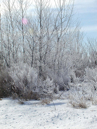 Ice trees <br /> <br /> Bill Scott<br /> bshm@charter.net