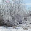 Ice trees <br /> <br /> Bill Scott<br /> bshm@charter.net