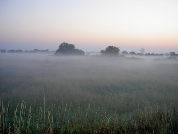 Photo of the swampy area to the north of the Meijers parking lot, early on a foggy morning with a Minolta G-500 point and shoot camera. Looks like the Scottish Moors, doesn't it!<br /> <br /> Bill Scott<br /> bshm@charter.net