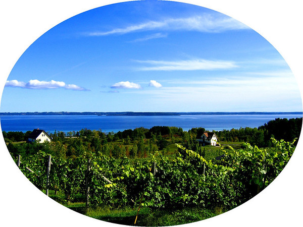 <b>Submitted By:</b> Steve Nowakowski <b>From:</b> Lambertville, Michigan <b>Description:</b> Overlooking Grand Traverse Bay from the Willow Vineyards 10-4-09 Canon Powershot A95