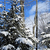 <b>Submitted By:</b> Sherry L. Good <b>From:</b> Interlochen <b>Description:</b> Beauty just out our back door.