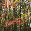 <b>Submitted By:</b> nancy Miela <b>From:</b> Fife Lake <b>Description:</b> Autum 2008 Fife Lake