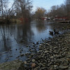 <b>Submitted By:</b> Maggie Frederick <b>From:</b> Traverse City <b>Description:</b> Ducks by the Boardman
