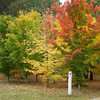Barbara J. Kuhlman<br /> Interlochen, MI.<br /> <br /> Fall<br /> photo taken in Interlochen 2008