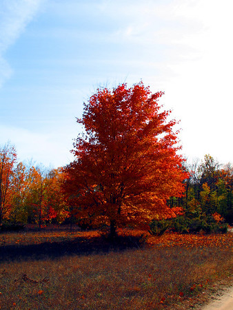 Paul Nepote<br /> Traverse City, Michigan<br /> Alone In The Field<br /> Colors of Fall<br /> Canon A620