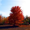 Paul Nepote<br /> Traverse City, Michigan<br /> Alone In The Field<br /> Colors of Fall<br /> Canon A620