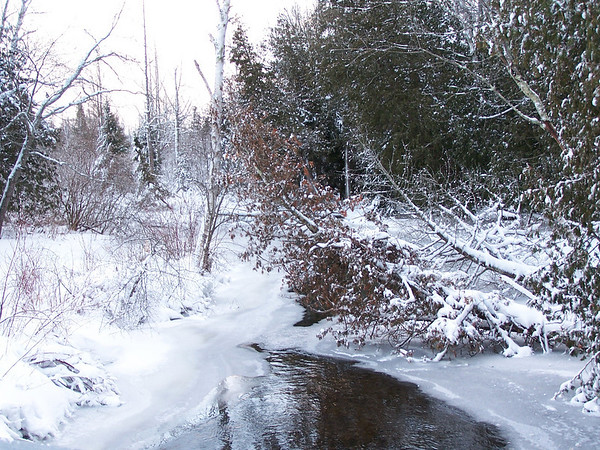 <b>Submitted By:</b> Lori Malmstrom <b>From:</b> Honor <b>Description:</b> Platte River at Deadstream