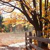 <b>Submitted By:</b> Arlene Beall <b>From:</b> Williamsburg <b>Description:</b> Trail at Deadman's Hill