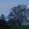 <b>Submitted By:</b> Steven Bath <b>From:</b> WIlliamsburg <b>Description:</b> Mulberry in the misty morning.