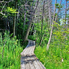 <b>Submitted By:</b> Andy Boyd <b>From:</b> Clay,MI <b>Description:</b> Hiking trail at Sabin Pond Traverse City,MI