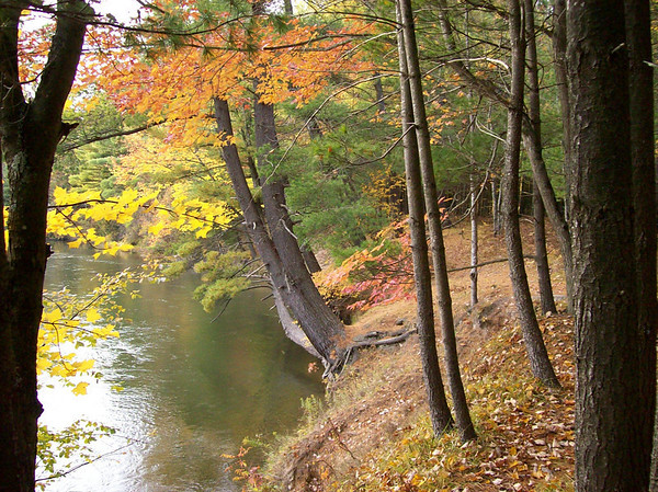 <b>Submitted By:</b> Nancy Miela <b>From:</b> Fife Lake <b>Description:</b> Manistee River at old 131 Camp Grounds. Fife Lake 2008