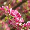 Barbara J. Kuhlman<br /> Interlochen, MI.<br /> <br /> Spring tree<br /> photo taken in Traverse City, MI.