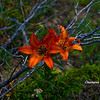 <b>Submitted By:</b> Christopher M Nepote <b>From:</b> Traverse City, Michigan <b>Description:</b> Flower growing wild on the Sleeping Bear Sand Dunes.
