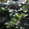 <b>Submitted By:</b> Roslyn Lambert <b>From:</b> Traverse City  <b>Description:</b> Just a spider web.