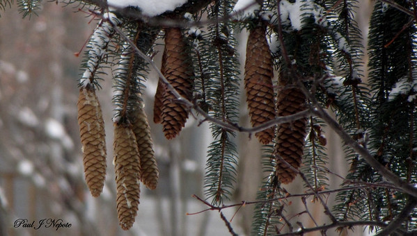 Natural Ornaments Paul Nepote Traverse City, Michigan Canon PowerShot SX10 IS