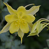 <b>Submitted By:</b> Myongsoon Cho <b>From:</b> Traverse City <b>Description:</b> My first time seen a columbine will be with me all time.