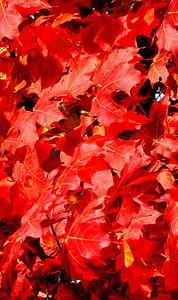 Paul Nepote Traverse City, Michigan Colors of Fall Leelanau County, Michigan Canon A620