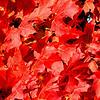 Paul Nepote<br /> Traverse City, Michigan<br /> Colors of Fall<br /> Leelanau County, Michigan<br /> Canon A620