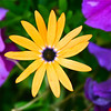 <b>Submitted By:</b> Mark Width <b>From:</b> Rapid City <b>Description:</b> Walking thru Elk Rapids we saw these flowers that a local shop keeper planted.  It took our breath away.  Thank you for sharing your gardening skills, I will stick to photography.