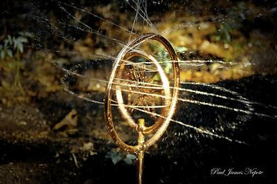 Copper Butterfly  Paul J Nepote Traverse City, Michigan Nikon D50 SLR