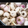 <b>Submitted By:</b> Brian Harwood <b>From:</b> Charlotte, NC <b>Description:</b> Garlic. Photo was shot at the beautiful Traverse City farmers market on July 21, 2010