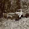 <b>Submitted By:</b> Vanessa R. Chavez <b>From:</b> Cadillac, MI <b>Description:</b> Two old trucks passing time in the woods.