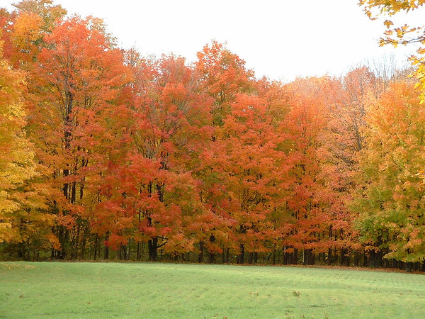 <b>Submitted By:</b> Brandon Glowacki <b>From:</b> Traverse City <b>Description:</b> Maple trees fall colors