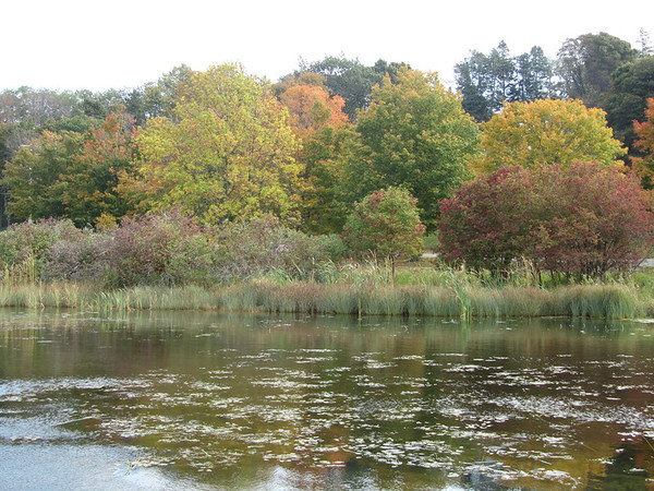 The fall colors in Empire Michigan<br /> <br /> Photographer's Name: Sherry Good<br /> Photographer's City and State: Interlochen, MI