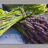 <b>Submitted By:</b> Brian Harwood <b>From:</b> Charlotte, NC <b>Description:</b> Lavender.  Photo was shot at the Beautiful Traverse City farmers market on July 21, 2010.