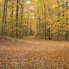 <b>Submitted By:</b> Brandon Glowacki <b>From:</b> Traverse City <b>Description:</b> Fallen leaves