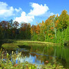 Fall colors in Northern Michigan.<br /> <br /> Photographer's Name: Sherry Good<br /> Photographer's City and State: Interlochen, MI
