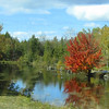 <b>Submitted By:</b> Sherry Good <b>From:</b> Interlochen Michigan <b>Description:</b> I think I shot this photo around Honor Michigan.