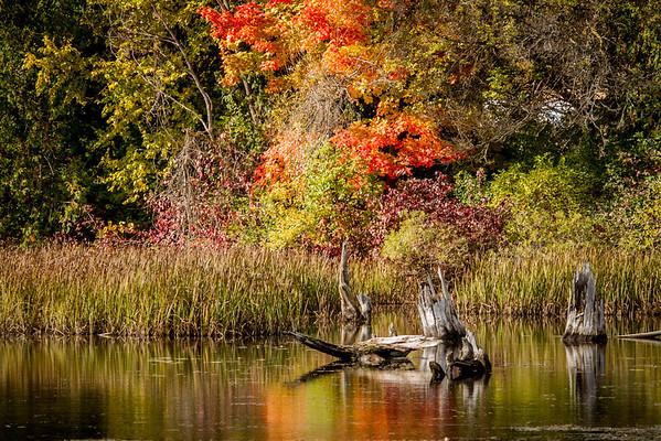 Fall Fire<br /> <br /> Photographer's Name: Peggy Sue  Zinn<br /> Photographer's City and State: traverse city, MI