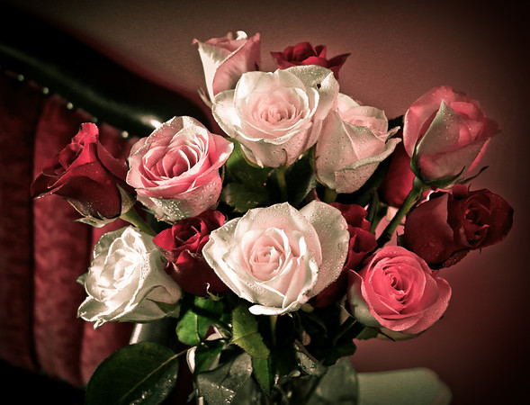 <b>Submitted By:</b> Peggy Sue Zinn <b>From:</b> Traverse City, Michigan <b>Description:</b> Valentines Roses
