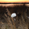 <b>Submitted By:</b> Jessica Clifton <b>From:</b> Traverse City <b>Description:</b> A feather lingers in the sunset at Antrim Natural Area
