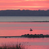 <b>Submitted By:</b> Lucy Hunter <b>From:</b> Williamsburg <b>Description:</b> Elk Rapids sunset