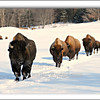<b>Submitted By:</b> Susan Niles <b>From:</b> Traverse City, MI <b>Description:</b> Taken at Oleson's Ranch, Traverse City, MI