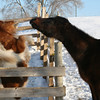 <b>Submitted By:</b> Susan Rehmann <b>From:</b> Traverse City <b>Description:</b> Louie and Sarge discussing the weather.