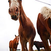 <b>Submitted By:</b> Sarah E. Fox <b>From:</b> Traverse City <b>Description:</b> This image was taken this fall, 2010, at a local farm.  I stopped to get some photos of the horses and got different view.