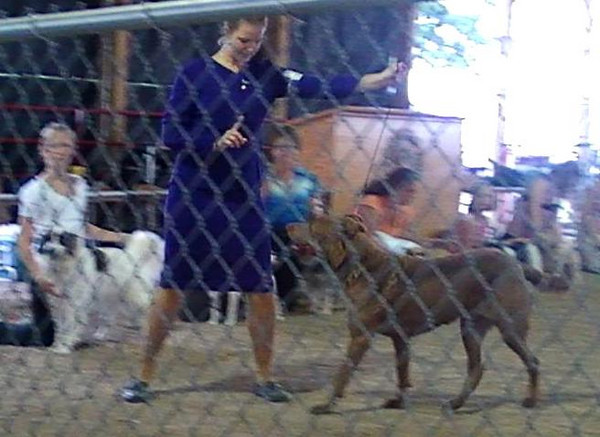 <b>Submitted By:</b> Karen Hall <b>From:</b> Suttons Bay <b>Description:</b> Carrie Gleason showing her Chesapeake Bay Retriever Zoey winning the Grand Champion Prizes for 2010 at the NW MI 4H Fair 8/13/2010!