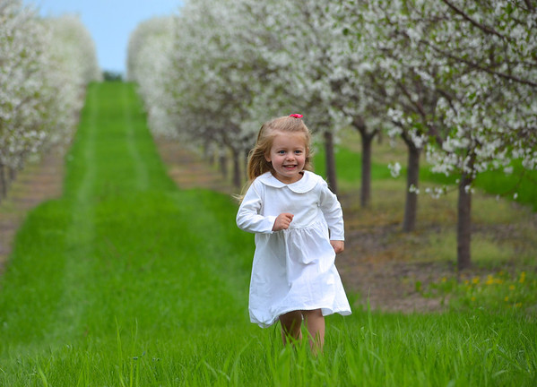 Photo was taken by Sarah Morio of her daughter on a Leelanau county cherry orchard. <br /> <br /> Photographer's Name: Sarah Morio<br /> Photographer's City and State: traverse city, MI