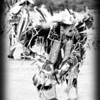 <b>Submitted By:</b> Peggy Sue Zinn <b>From:</b> Traverse City <b>Description:</b> Cherry Festival Powwow