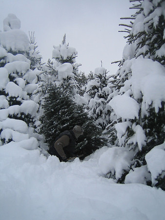 This photo is of the Christmas Tree we found Dec. 6 2008 in Cedar <br /> Michigan.....TIMBER!<br /> <br /> The Elliott Family in TC